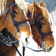 sleigh horse bells